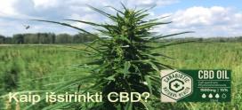 Kaip išsirinkti geriausią ir tinkamiausią CBD ?